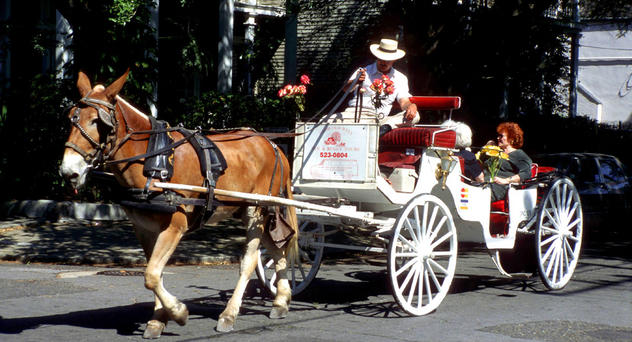 French Quarter Hotel New Orleans Horse Drawn Carriage Ride